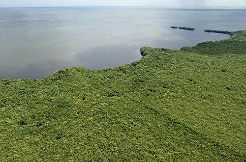 photo of western shore of Biscayne Bay