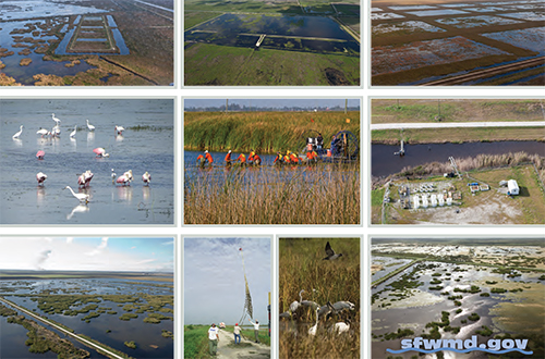 photo collage from cover of Science Plan for the Everglades Stormwater Treatment Areas