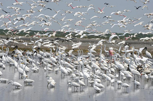 photo of mixed wading bird flock