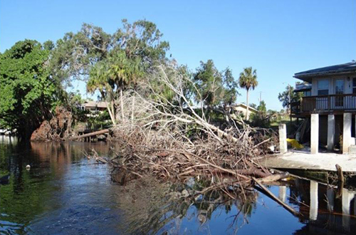 photo of downed trees in the Imperial River in Bonita Springs following Hurricane Irma