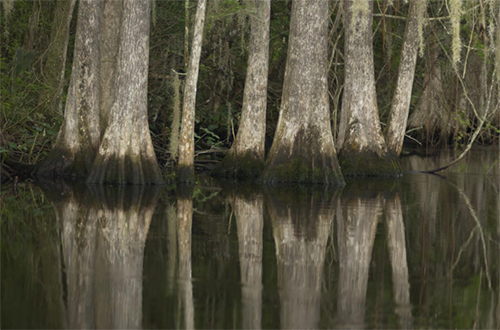 photo of Shingle Creek