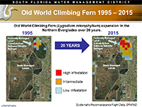 click for Old World climbing fern infestation 1995-2015