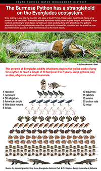 Click for Burmese python infographic